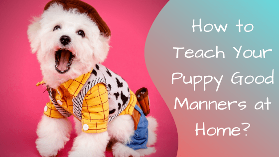 how to teach your puppy good manners at home
