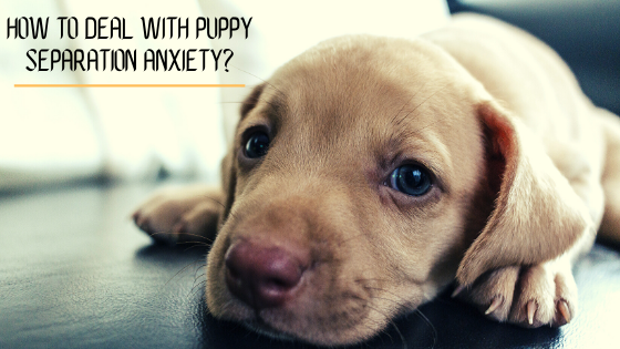 How to Deal With Puppy Separation Anxiety