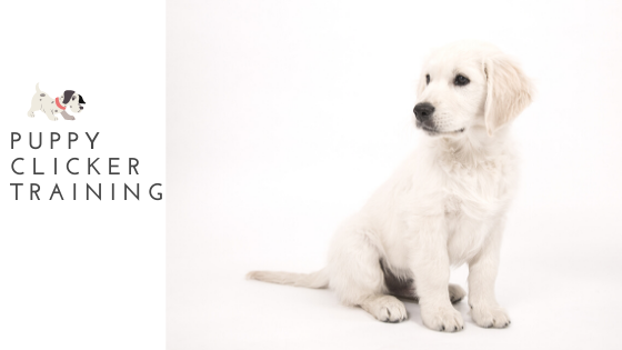 How to Clicker Training a Puppy