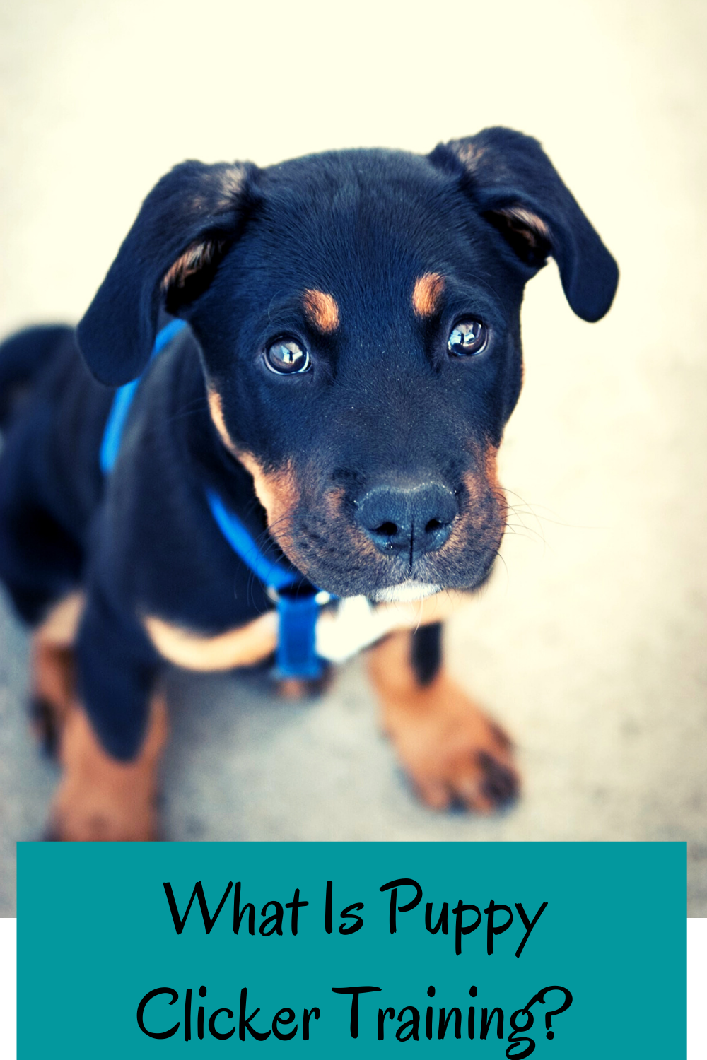 what is puppy clicker training